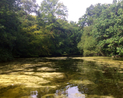 Water Surveys